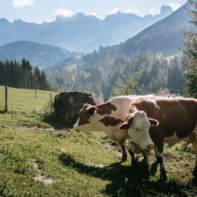 Naturleder - Biologische Tierhaltung